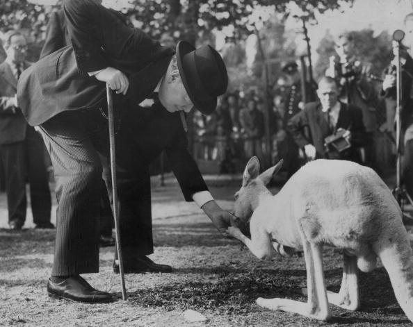 Winston Churchill says g'day to 'Digger' the kangaroo in 1947.