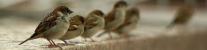 row-of-sparrows